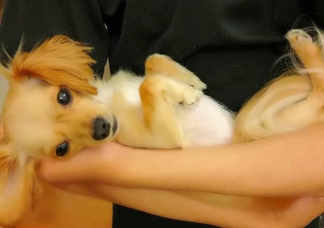 赤ちゃん抱っこされている犬