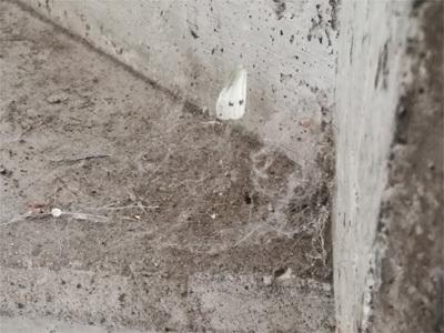 階段のスミに溜まったゴミ