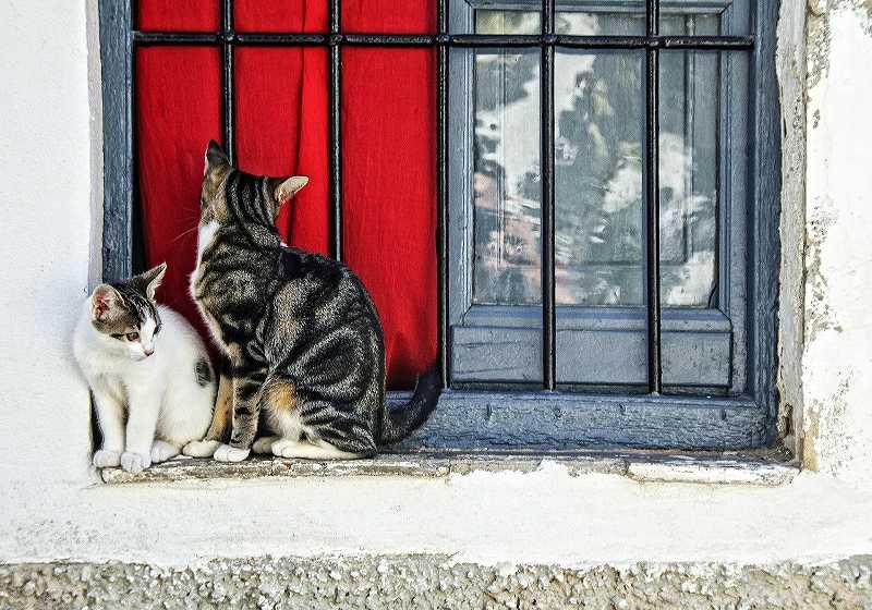 窓辺の2匹の猫