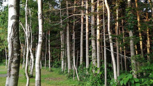 夕日が差し込む木立
