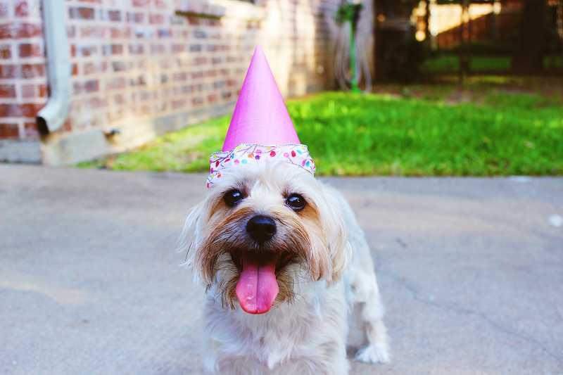 パーティーハットをかぶった犬