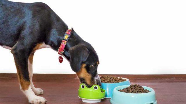 ご飯を食べる犬