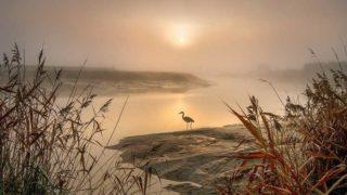 川のふちに立つ鳥